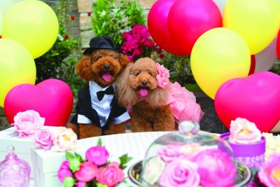 チャペル ザ・シアター サルヴェ/チャペルザシアターサルヴェ:写真19:愛犬もドレスアップ♪